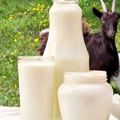 Kozje-mlijeko-najveći-je-zaštitnik-vašeg-zdravlja